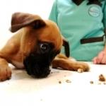 Alimentos tóxicos para o seu animal